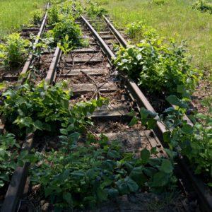 Podróżowanie koleją nie jest czynnością towarzyską...