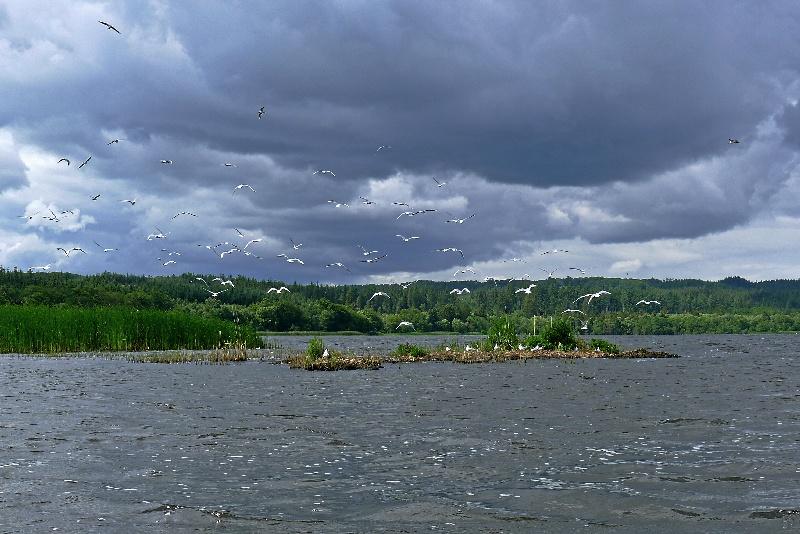 Na spływie w Danii