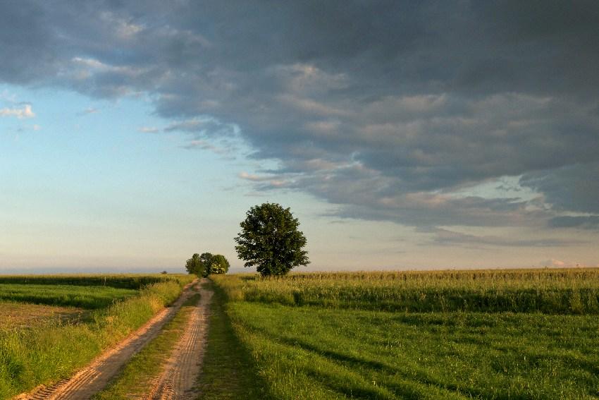 wyjechać na wieś