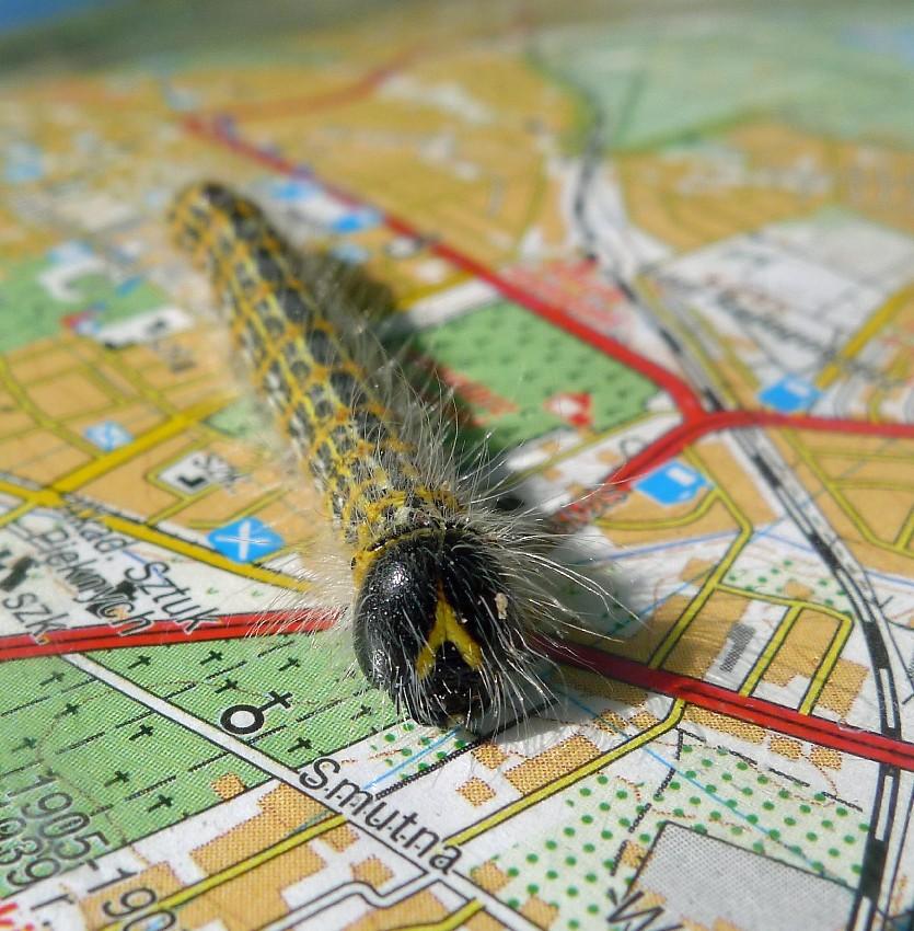 osobisty GPS