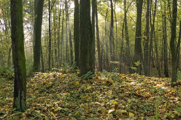 Ziemia Przedborska - Rezerwat Góra Chełmo