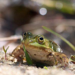 Żabka, mała żabka…
