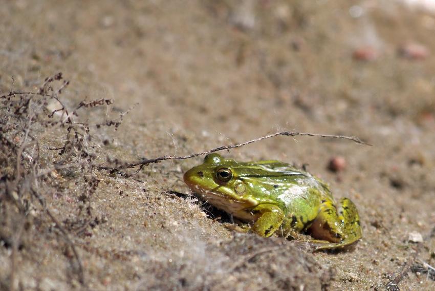 Read more about the article Żabka, mała żabka…