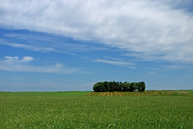 okoliczne pola