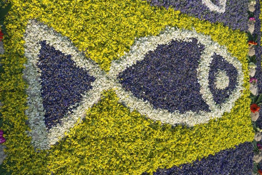 Kwiatowe dywany w Spycimierzu