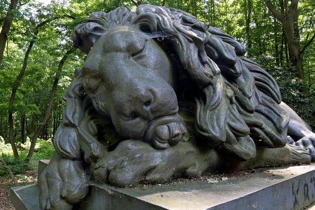 Lew w miejscowości Pokój