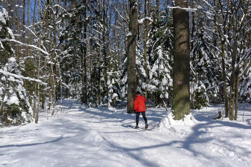 A zimą zapraszam na narty biegowe