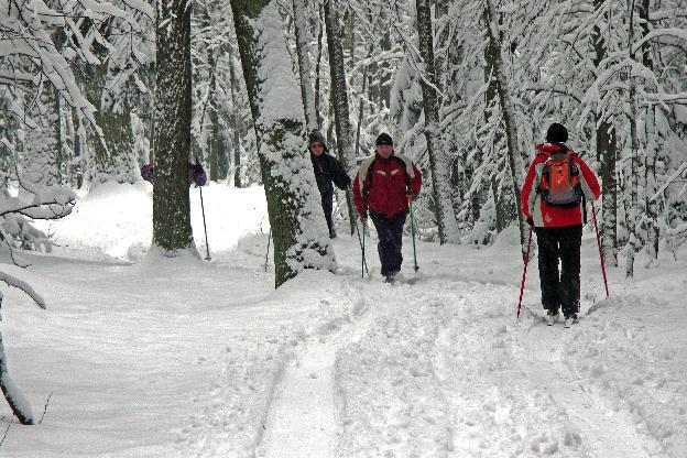 Zimowa wycieczka do lasu