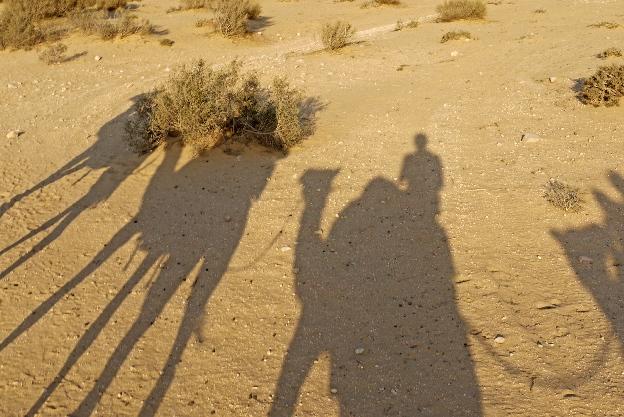 Negew, Wielbłądy