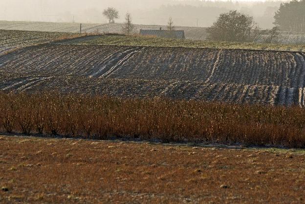 sieradzkie, wieś, pola