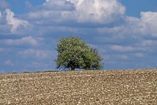 na polach rosną kamienie