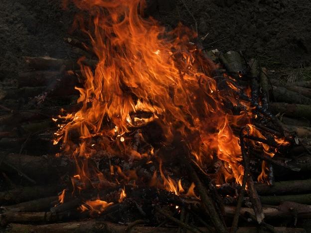 ognisko, czyli dzikie życie