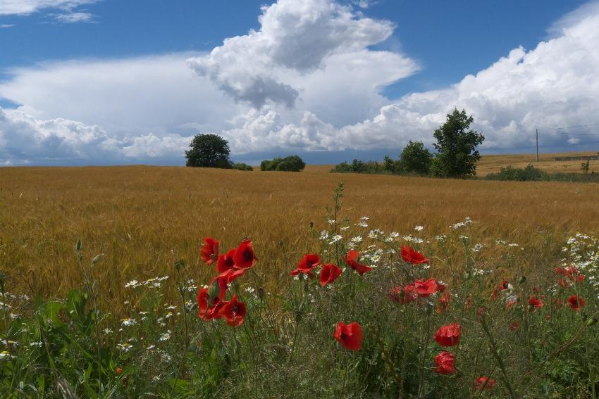 Pojezierze Brodnickie - najlepszy region na letni wypad rowerowy