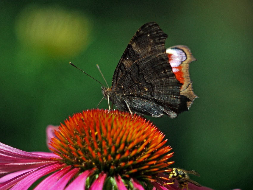 motyl i kwiat