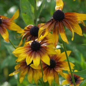 Kwiaty mamy – radość, troska i utrapienie