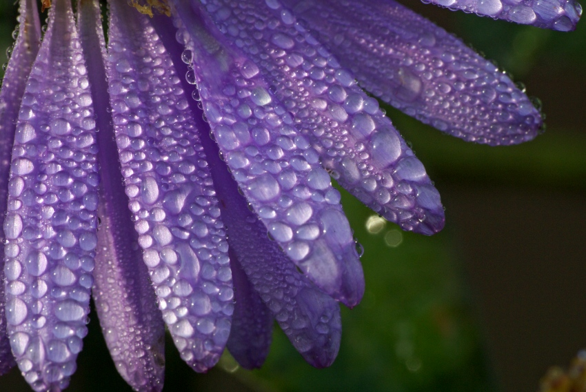 Kwiaty mamy - radość, troska i utrapienie