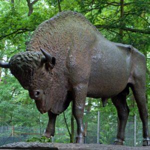 Żubr, Jeleń i Konewka – czyli wizyta w Spalskim Parku Krajobrazowym