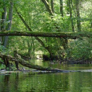"""Rzeka inna niż Wisła. Na Gwdzie z """"krewnymi i znajomymi królika"""""""