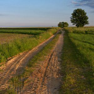 Podróż z kaczorem – zwiedzamy okolice Wielunia