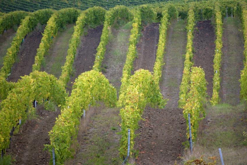 Południowe Morawy i winnice