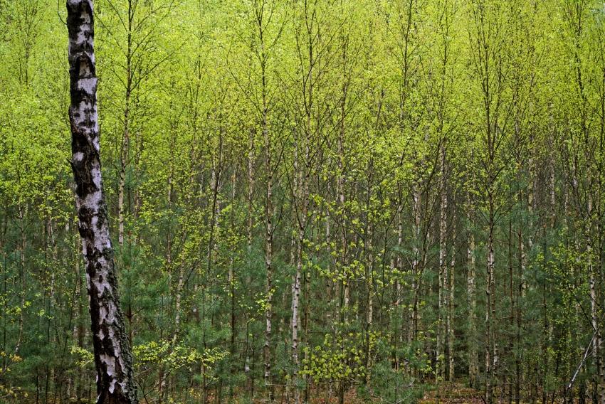 Las i jego sekrety. Czego na pewno nie uczyli cię w szkole