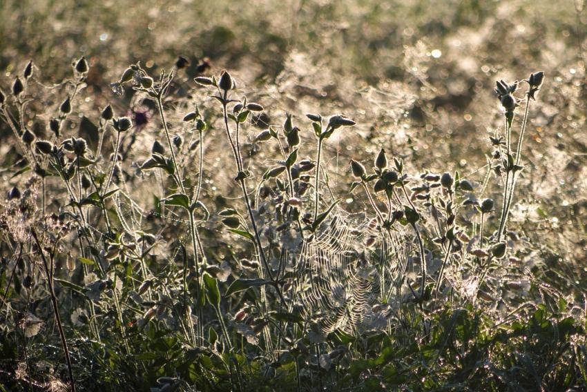 łąka o poranku