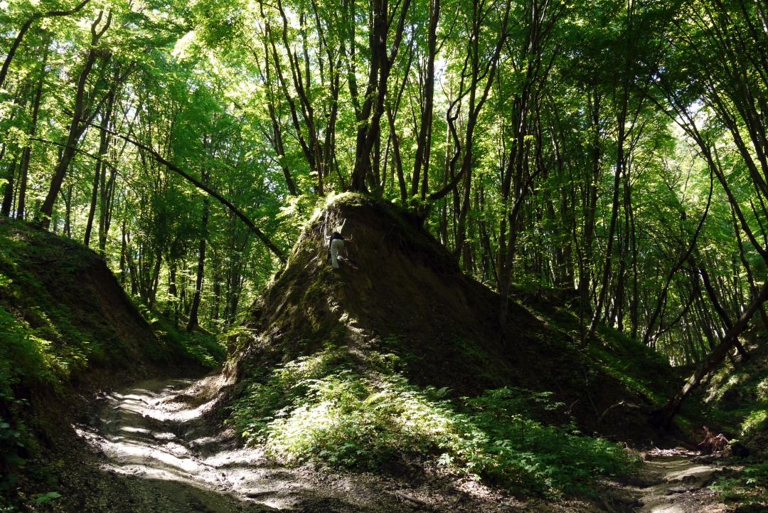 Skierbieszewski Park Krajobrazowy