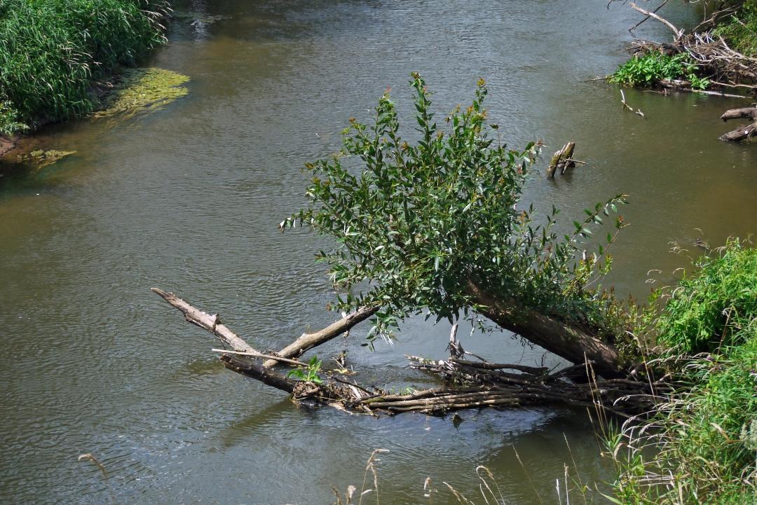 Prosna - pierwszy spływ kajakowy
