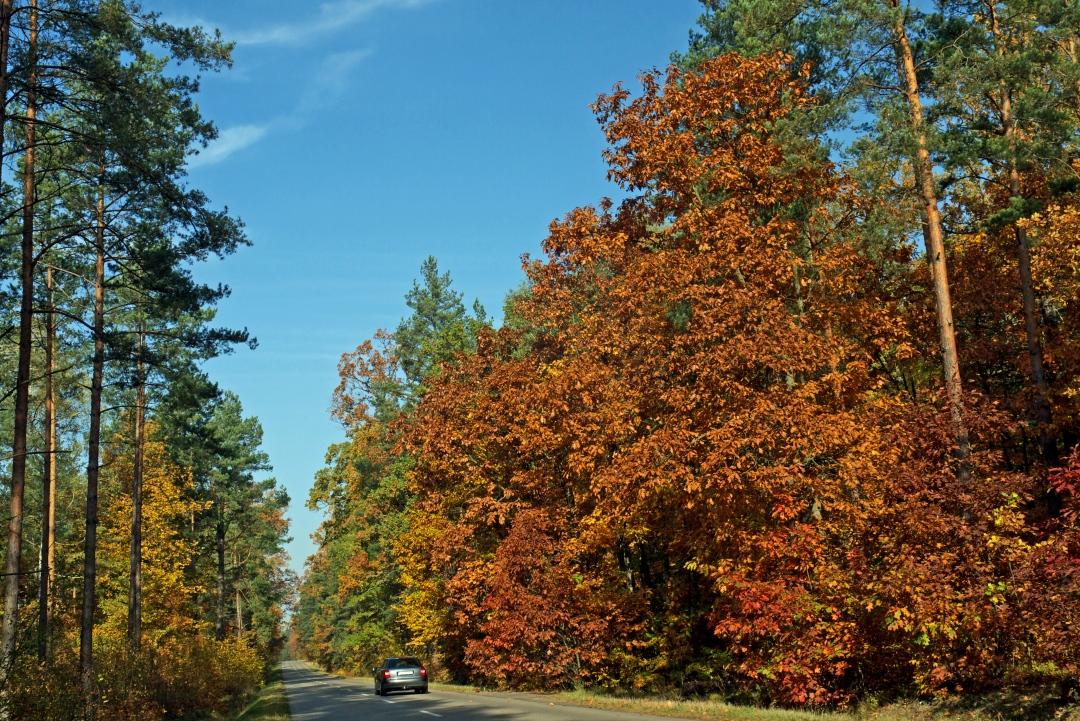jesienna szosa