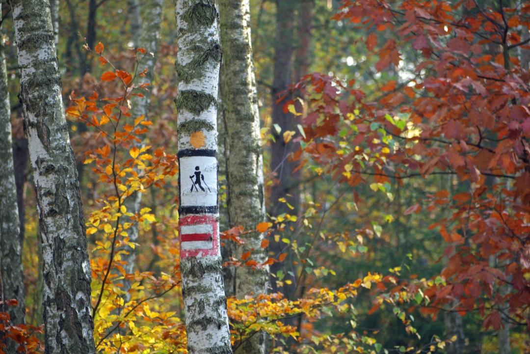 Zloty Potok i okoliczny las