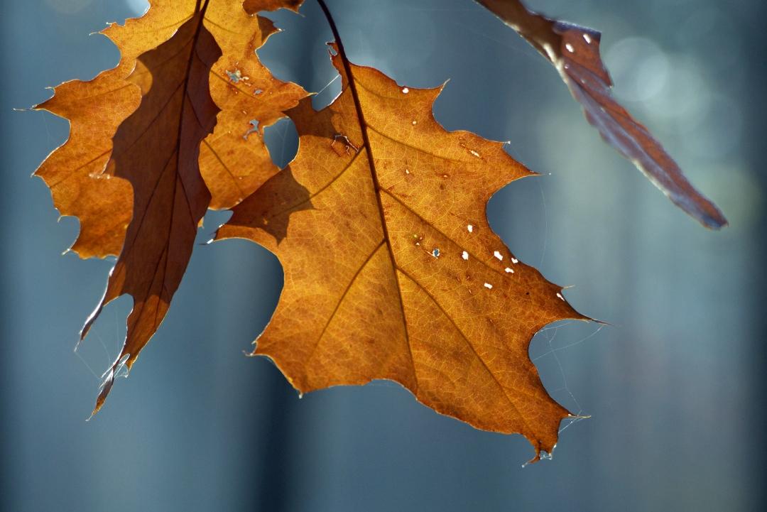 Złoty Potok złotą jesienią. Fotowycieczka na północnej Jurze