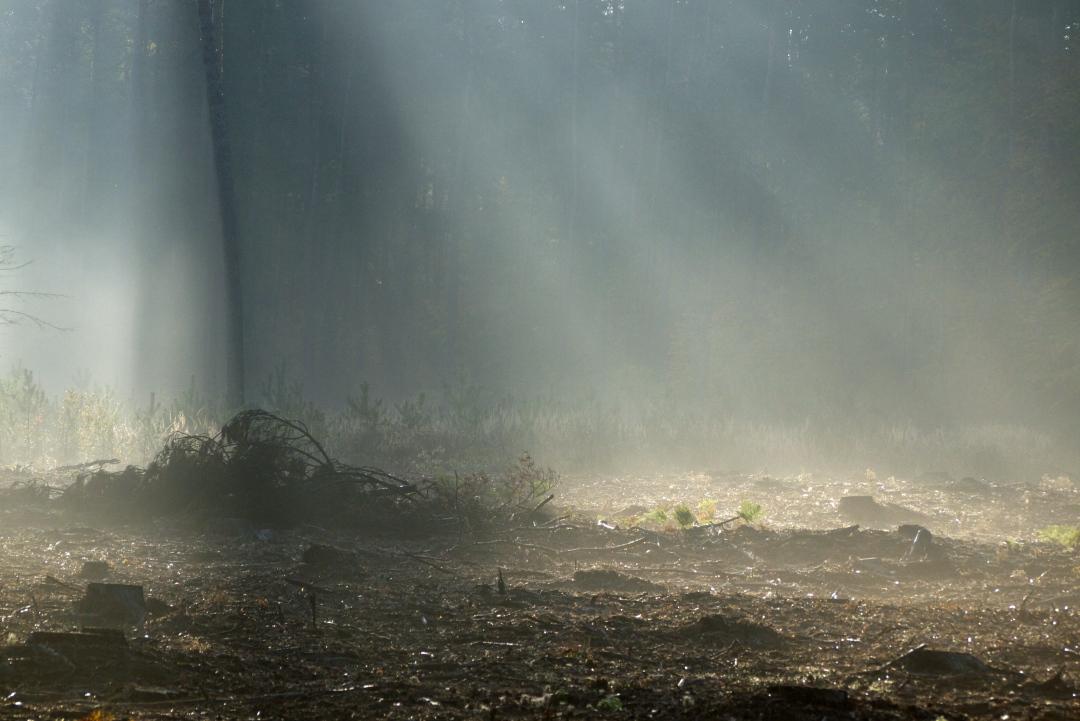 las o świcie