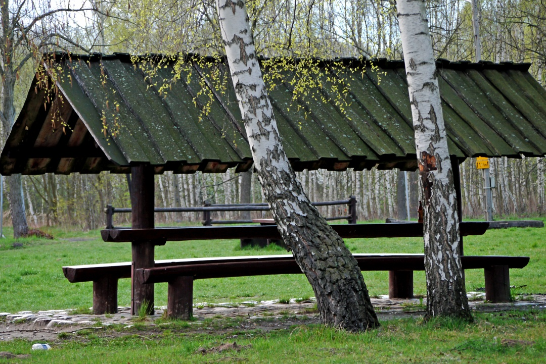Las Łagiewniki