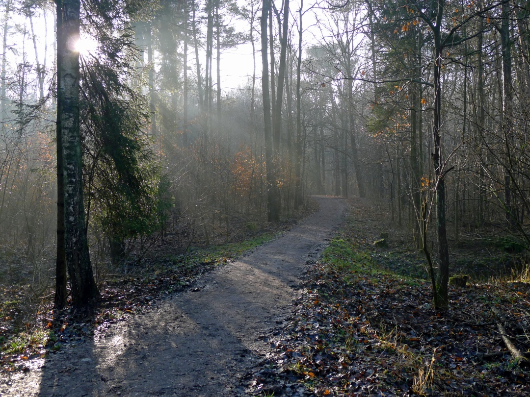 Las Łagiewnicki
