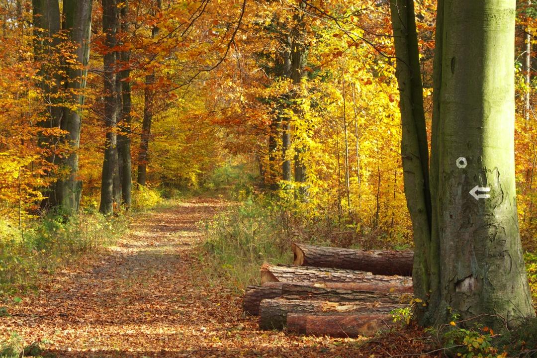 Las Wiączyń