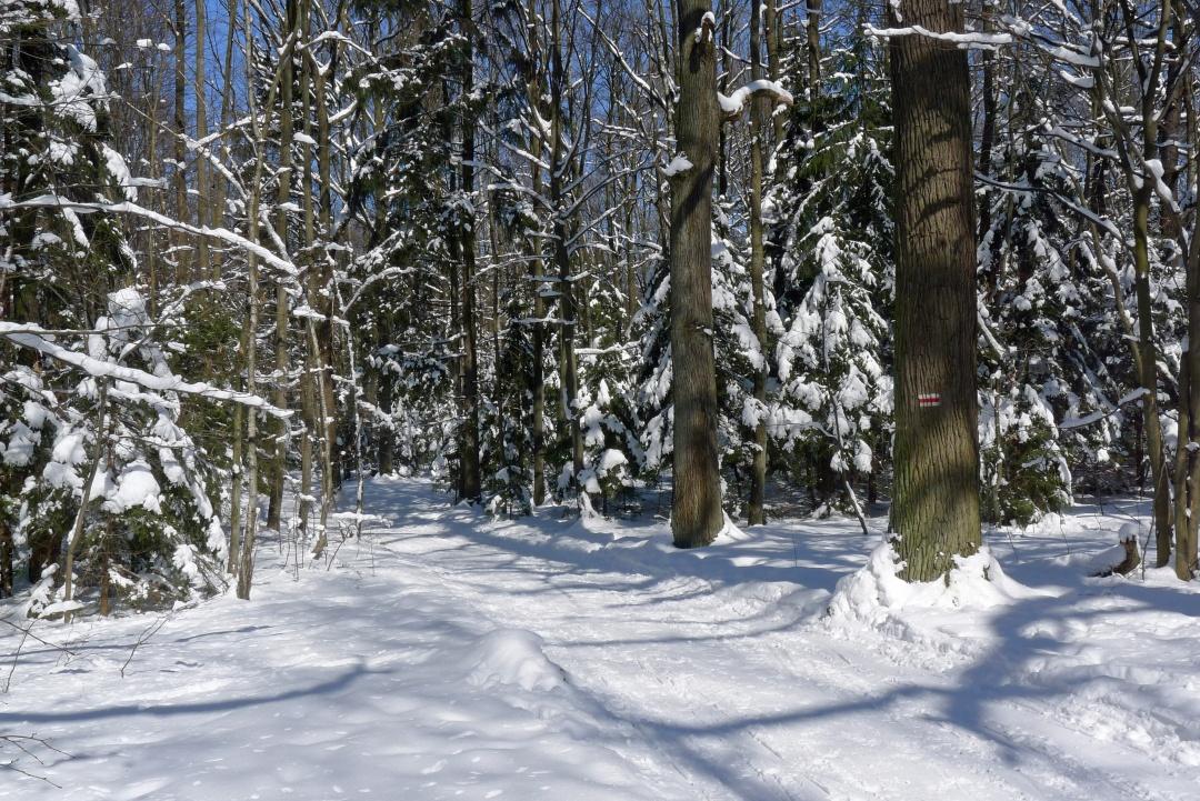 Łagiewniki zimą