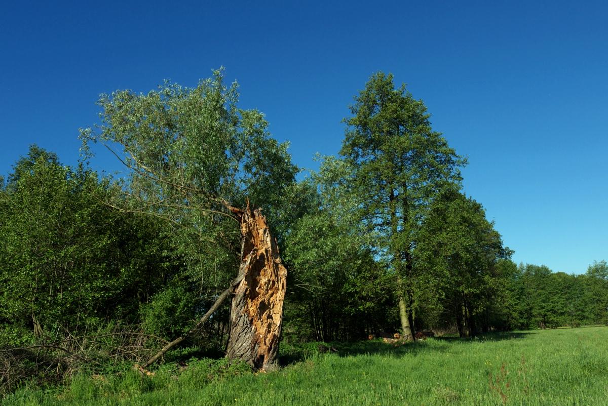okolice łowicza