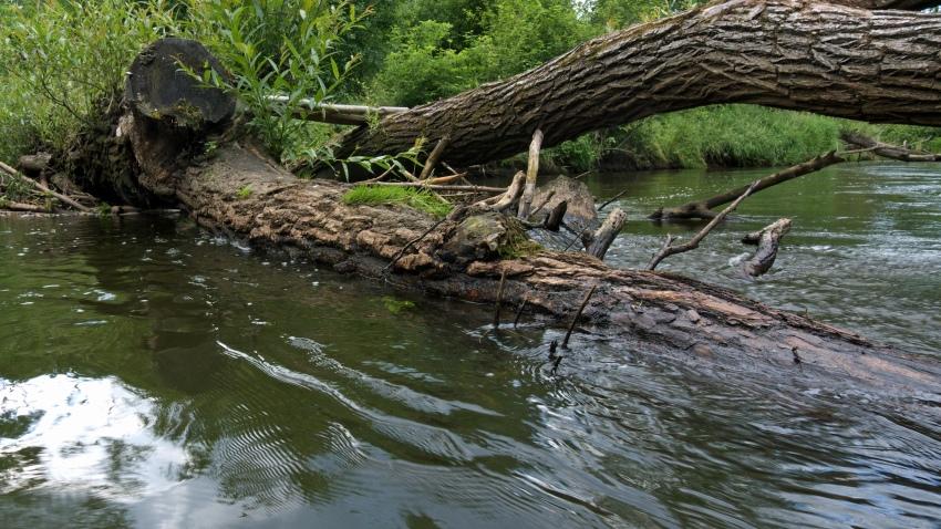 gdzie na kajak - rzeka Drzewiczka