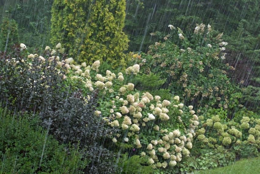 deszczowy ogród