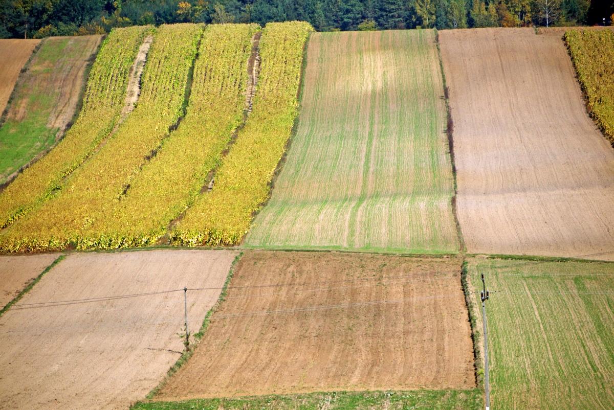 Krajobraz Ponidzia