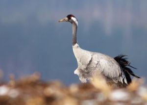 Fotografia dzikiej przyrody – wywiad z Iwoną i Wojtkiem