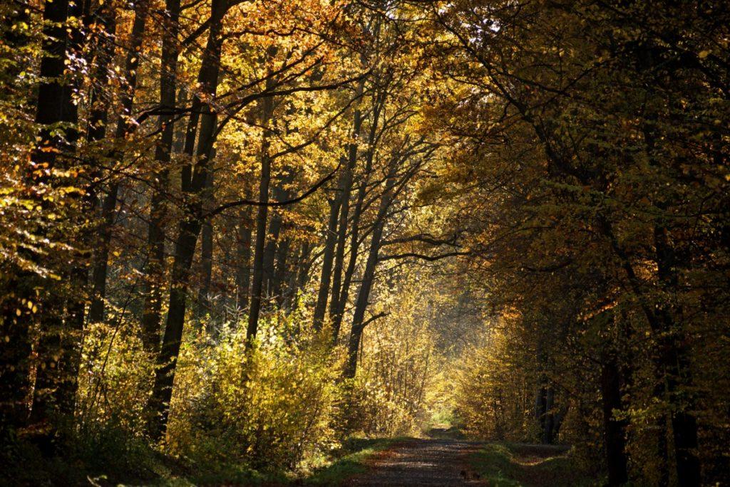 Wiaczyń las