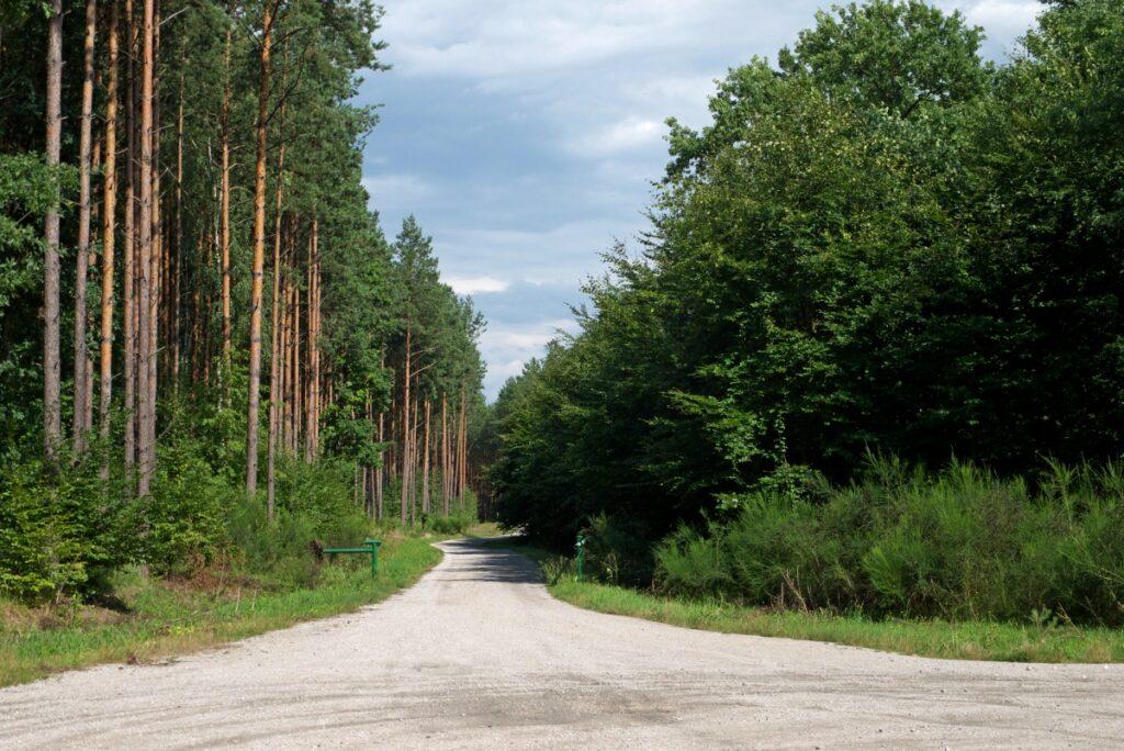 lasy spalskie odludne kompleksy leśne w Polsce