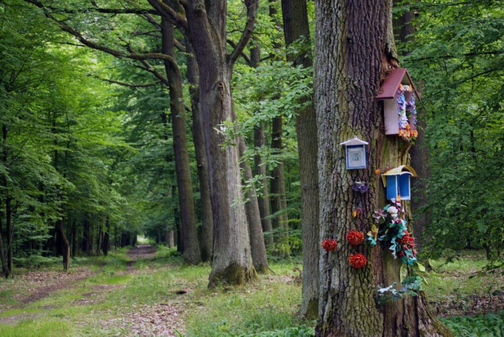Puszcza Bolimowska - odludne kompleksy leśne w Polsce