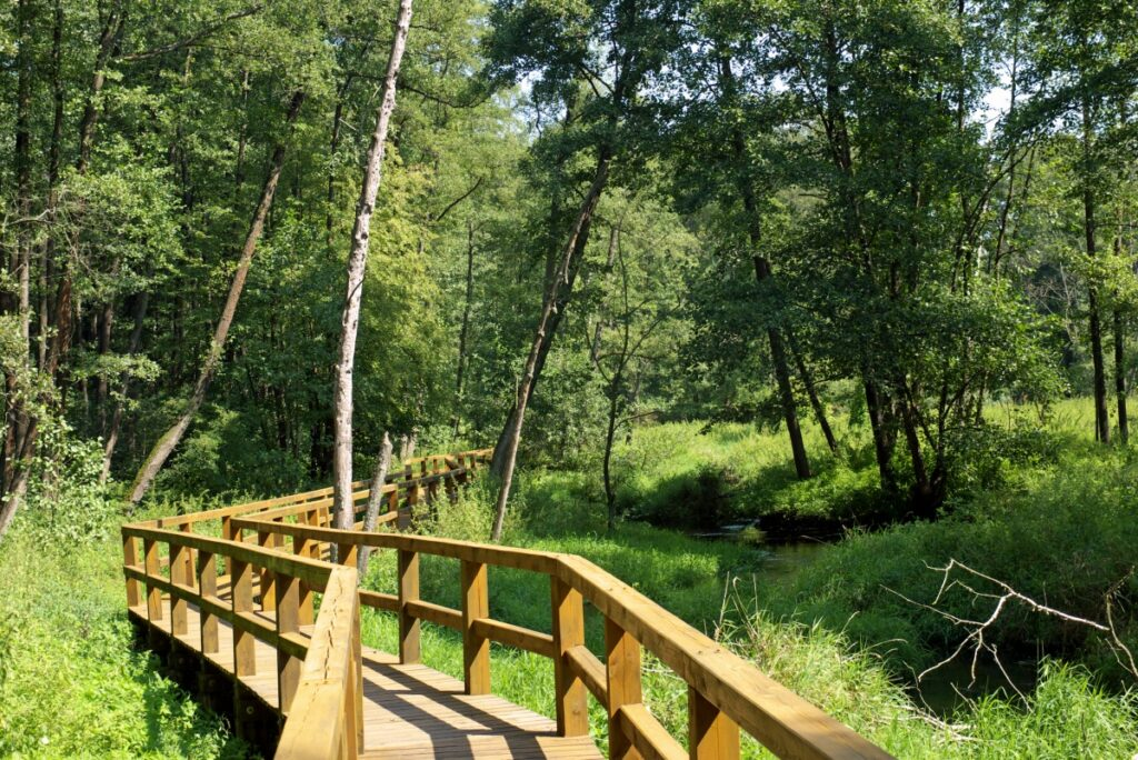 Rezerwat Zrodla Krolewskie