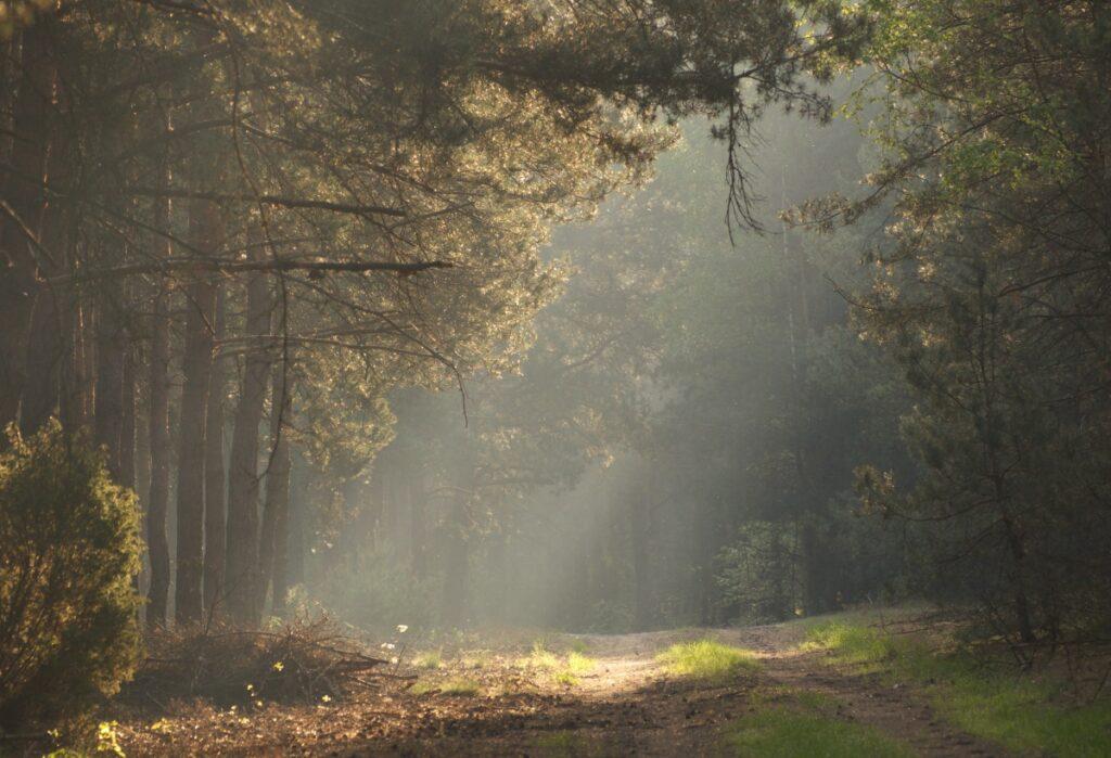 odludne kompleksy leśne w Polsce