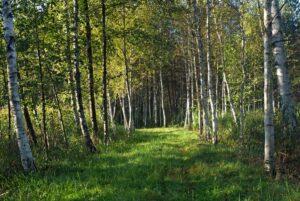 Odludne kompleksy leśne w Polsce 5+1 propozycji