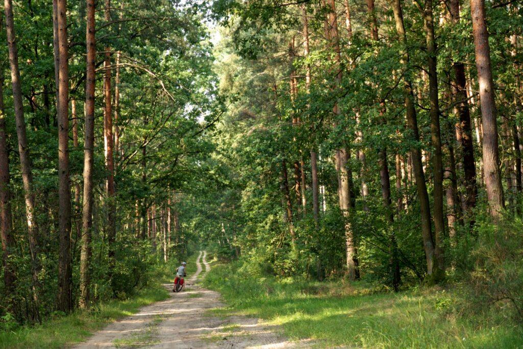 Puszcza Kozienicka - odludne kompleksy leśne w Polsce